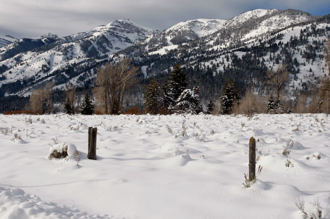 The Mountain Pulse Photo of the Day 11/30/10 - Jackson Hole Mountain Resort