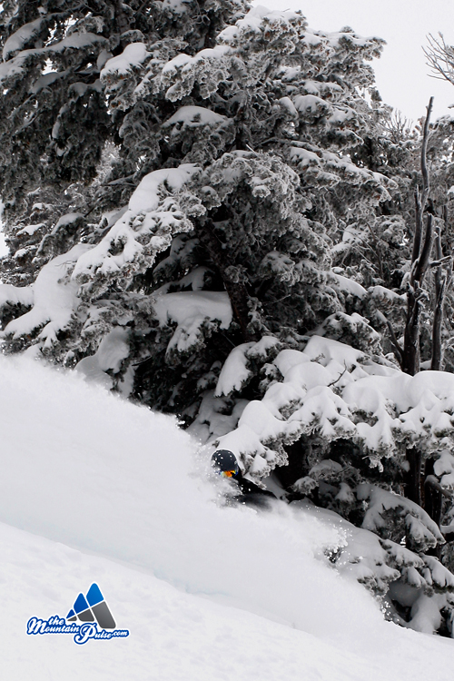 The Mountain Pulse Photo of the Day 12/15/10 - Grand Targhee Powder