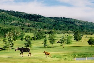 Grand Targhee Golf Jackson Hole Grand Teton Mountain Pulse