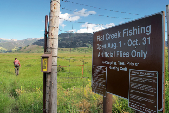 08-01-11, fly fishing, jackson hole, flat creek fishing report, grand teton national park fly fishing report