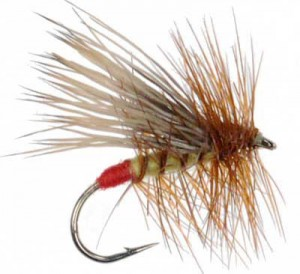 The Mountain Pulse Fly Fishing Report Yellow Sally