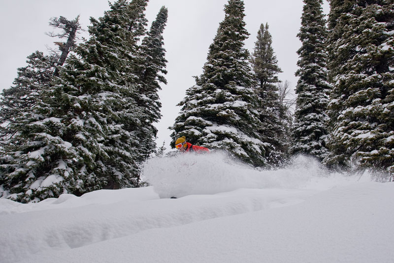 the mountain pulse, photo of the day, jackson hole, powder skiing