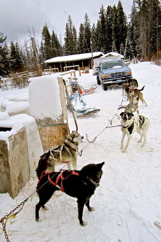 dog_sledding_04, dog sledding, togwotee pass, jackson hole, the mountain pulse