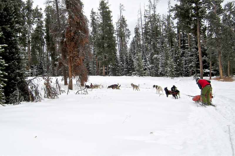 dog sledding, togwotee pass, continental divide, jackson hole, the mountain pulse