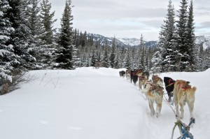 dog sledding, togwotee pass, jackson hole wyoming, the mountain pulse, wind river range, continental divide