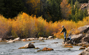 The Mountain Pulse Jackson Hole Fly Fishing Maps