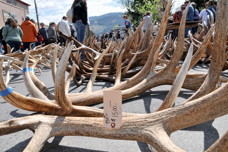 05_19_2012_800x533, elk fest 2012, the mountain pulse, jackson hole, town square, abortion protests