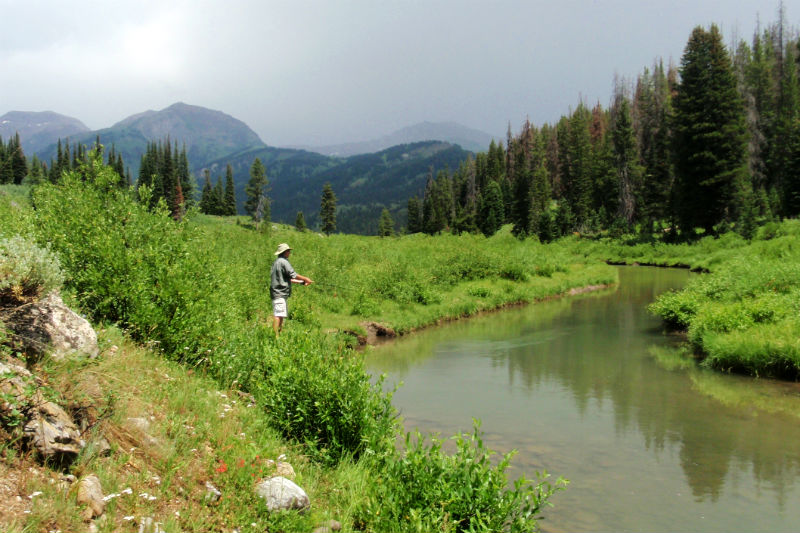 backcountry fly fishing jackson hole wyoming snake river creeks