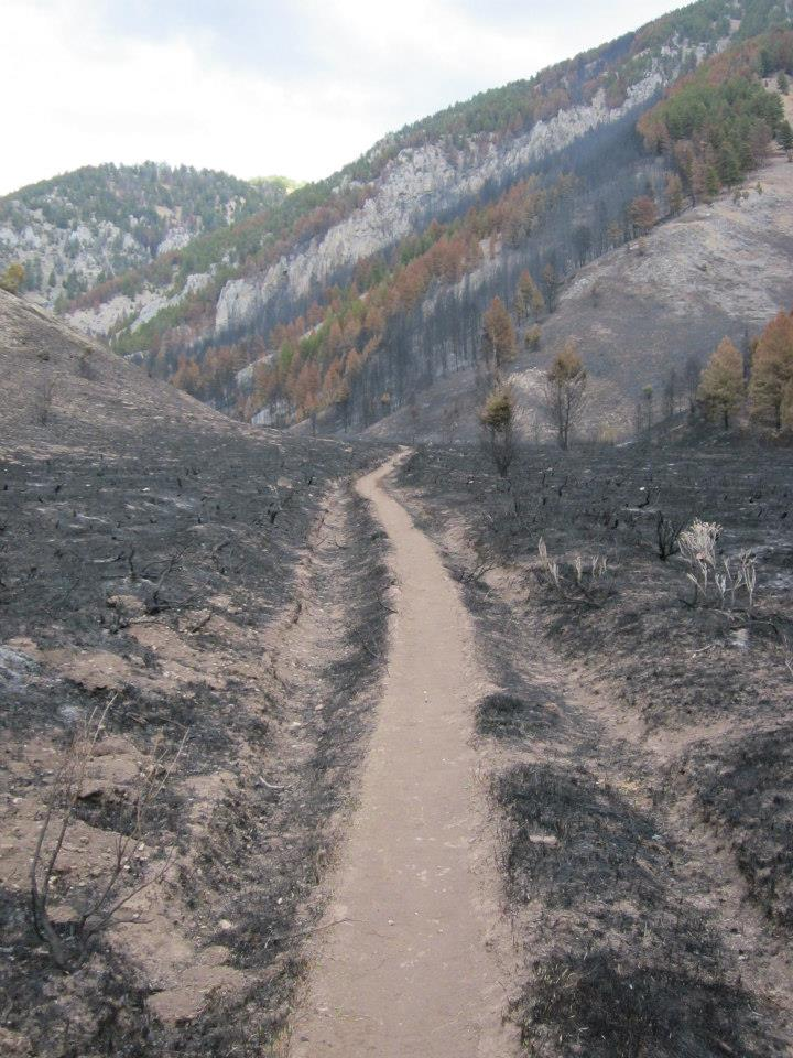 fire_damage_friends_of_pathways snow king resort bridger teton national forest