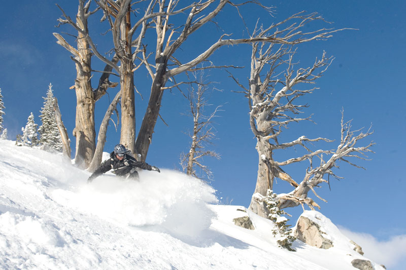 the mountain pulse, photo of the day, jackson hole backcountry, snowboarding, powder stash