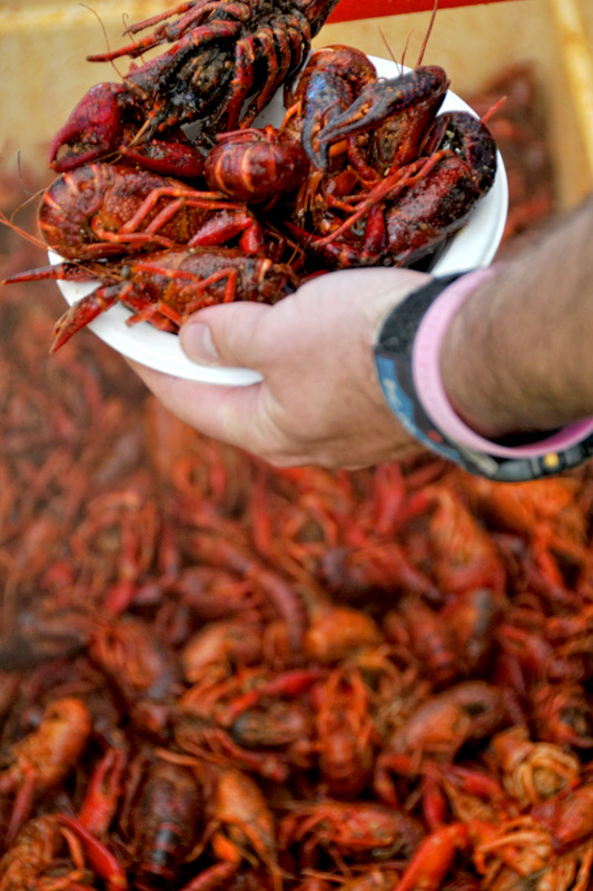 crawfish_boil_05a, the mountain pulse photos of the day, 307 live 8th annual jackson hole crawfish boil